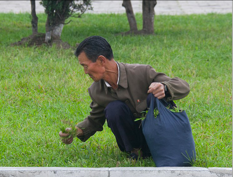 north korean picking grass for food in north korea